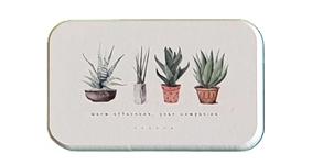 Porte savon diatomite Plantes